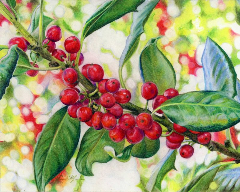 """""""Jolly Holly"""", 8"""" x 10"""", colored pencil"""
