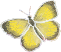yellow-butterfly1
